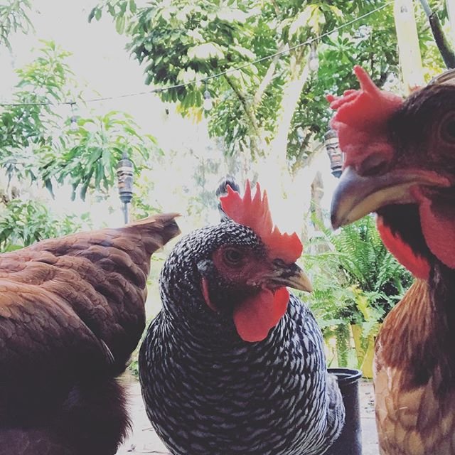 Today the girls look like they are about to drop the hottest mixtape of the year. What do you think? #lilwing #chickyminaj #egginem